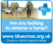 Blue Cross Burford (Powys Horse)