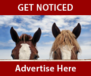 Get Noticed (Powys Horse)